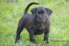 black_girl3_boerboel1