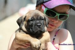 red_boy_boerboel3